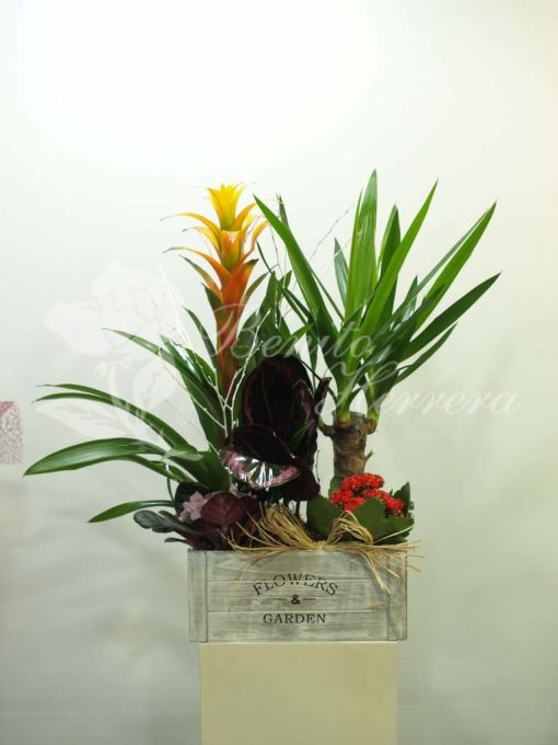 Caja Garden yuca 3