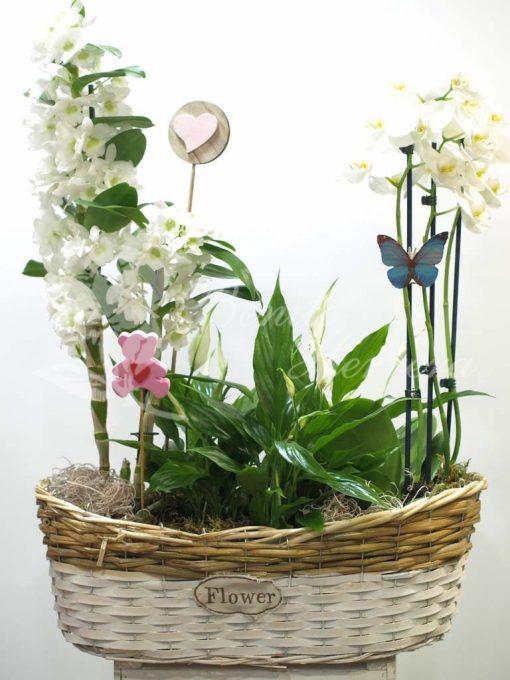 cesta flower dendrobium 3