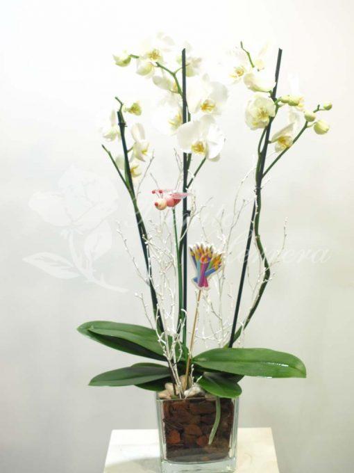 Phalaenopsis blanca con cristal y pincho 3