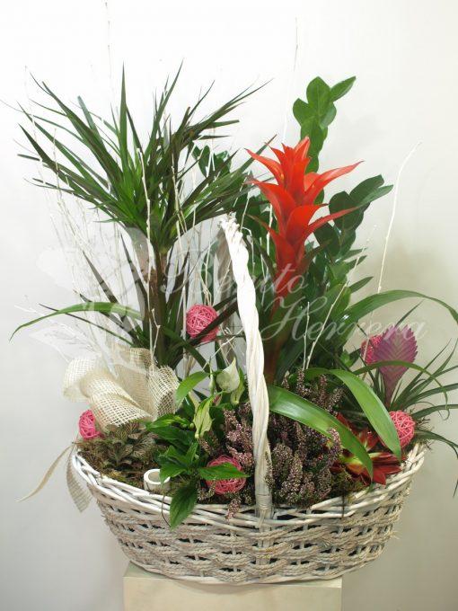 Cesta de plantas variadas 3