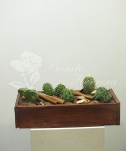 caja de madera con cactus