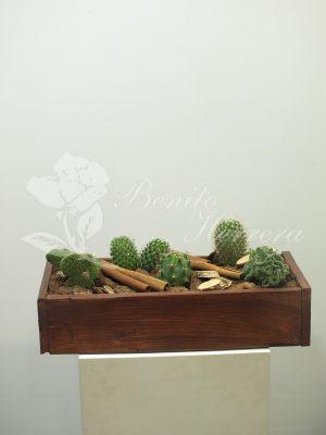 caja de madera con cactus 3