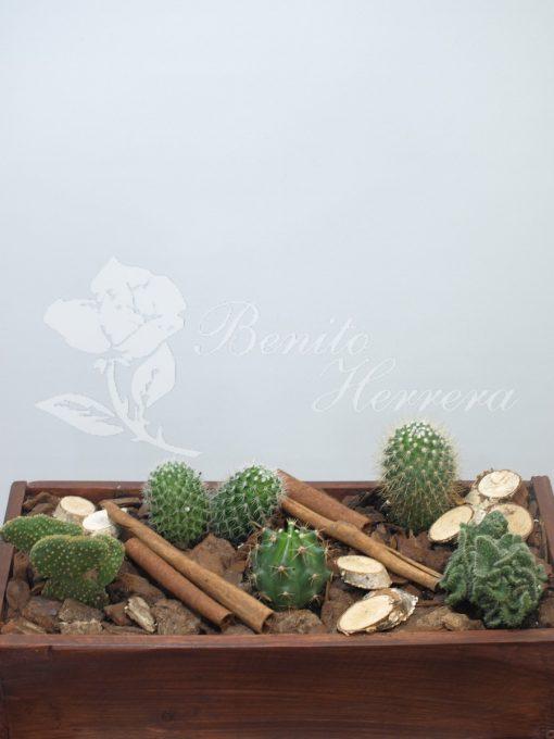 caja de madera con cactus 1