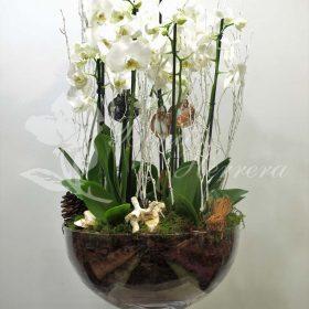 Copa de cristal con phalaenopsis
