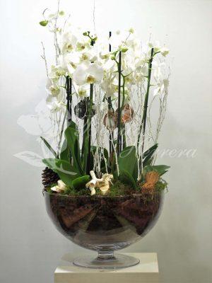 Copa de cristal con phalaenopsis 3