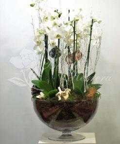 Copa de cristal con phalaenopsis 2