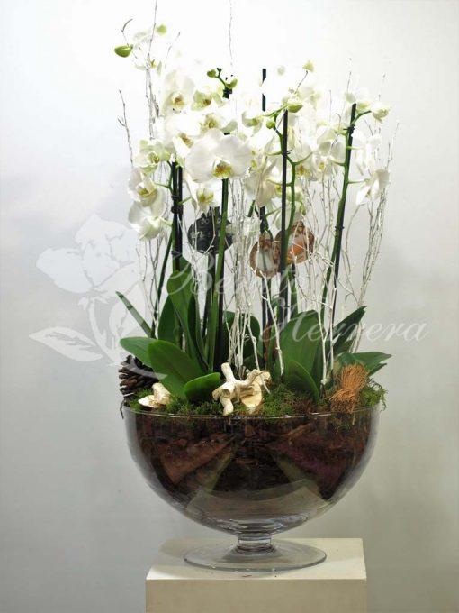 Copa de cristal con phalaenopsis 1
