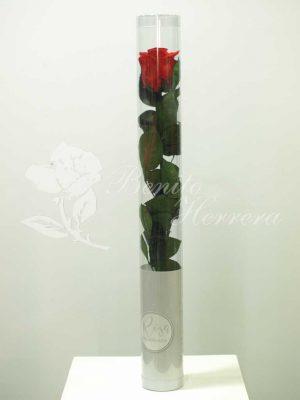 Rosa roja preservada 3