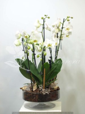 Copa de cristal con Phalaenopsis 8