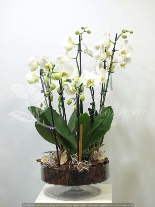 Copa de cristal con Phalaenopsis 4