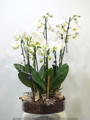 Copa de cristal con Phalaenopsis 9