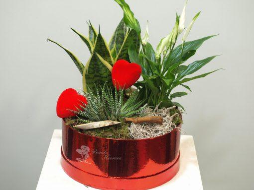 Caja plantas 3