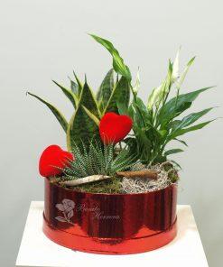 Caja plantas 5