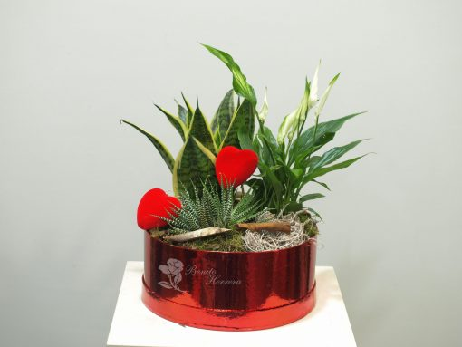 Caja plantas 4
