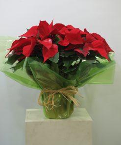 Planta de Navidad 6