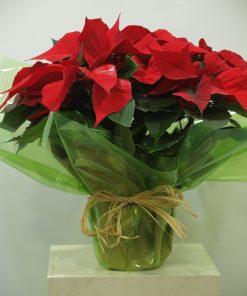 Planta de Navidad 7