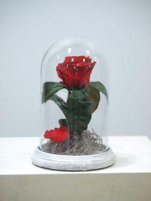 Cúpula Rosa eterna 6