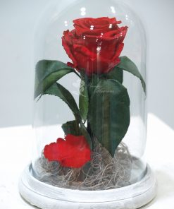Cúpula Rosa eterna 5