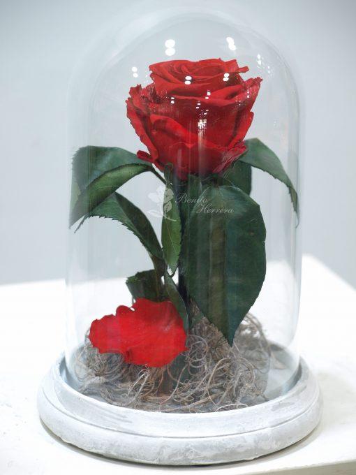 Cúpula Rosa eterna 4