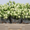 Rosas mini ramificadas paquete. 2
