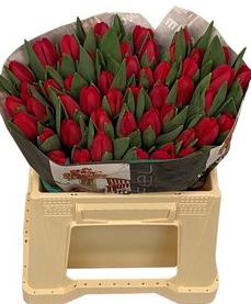 Tulipanes paquete 10tallos. 3