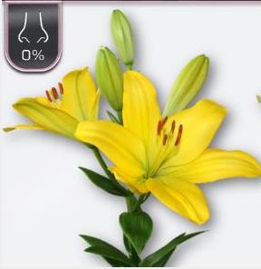 Lilium 10 tallos 3